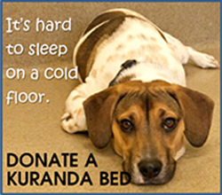 It's hard to sleep on a cold floor. Donate a Kuranda bed.