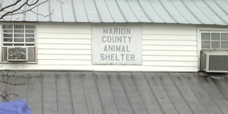 Marion County Florida Animal shelter