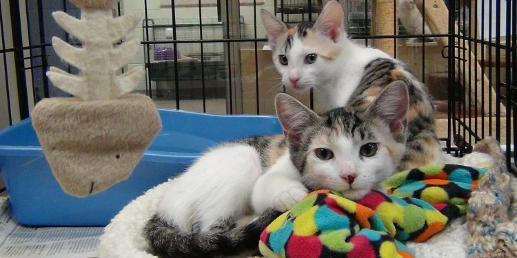 Palm City Humane Society