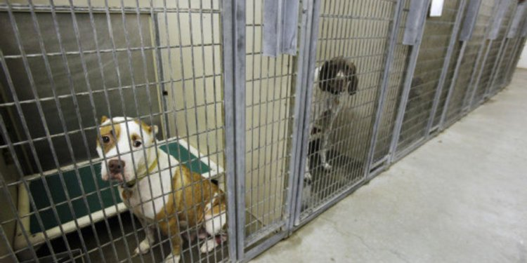 OKC Animal Shelters