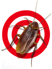 Pest Control and Exterminator Services in Orlando | Sterling Pest Control
