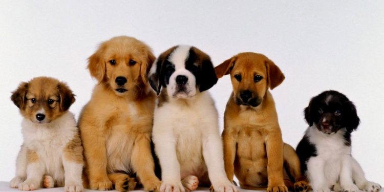Puppies at the pound