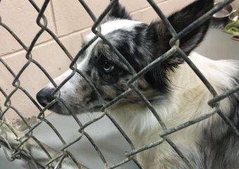 Several organizations teamed up to pull 59 dogs from a Grant County property. 22 of them are now in Mason with HART Animal Rescue. (FOX19 NOW)