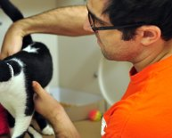 Animal Rescue jobs NYC