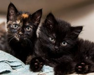 Animal Shelter for kittens