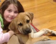 Dogs Rescue Groups in CT