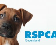 Gold Coast Pet Adoption
