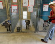 Hillsborough Animal Services Adoption