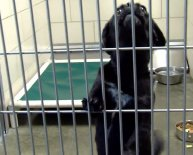 Jefferson County Animal Shelter