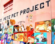 Pet Rescue St. Petersburg FL