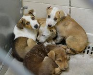 Rescue me Tampa shelter dogs