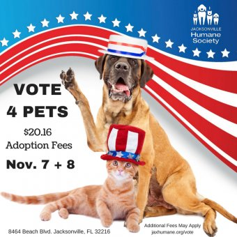 vote-4-pets-fb-and-ig